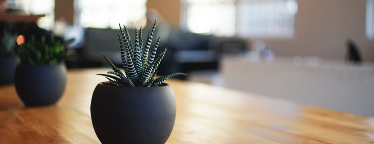Plant on dining room table